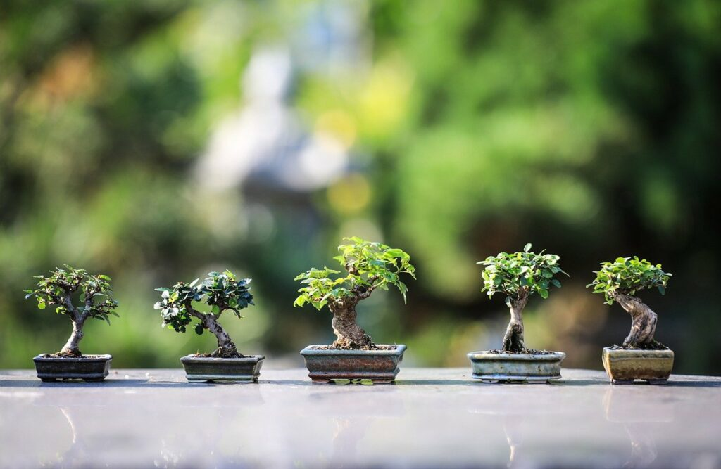 bonsai, wood, flora