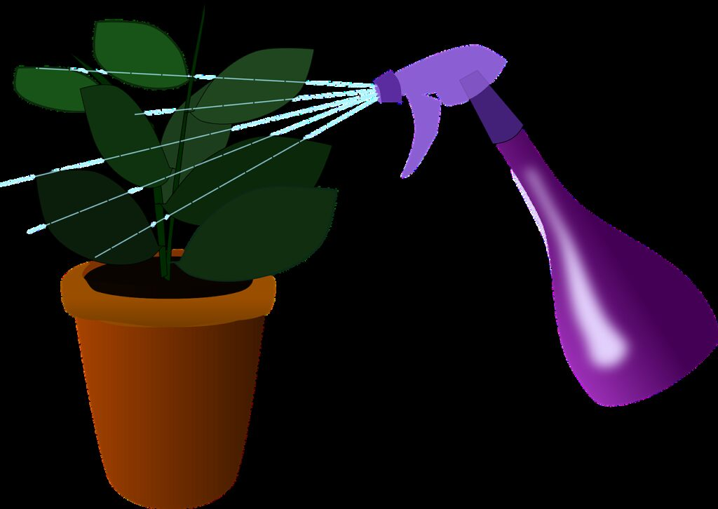 houseplant, plant, watering