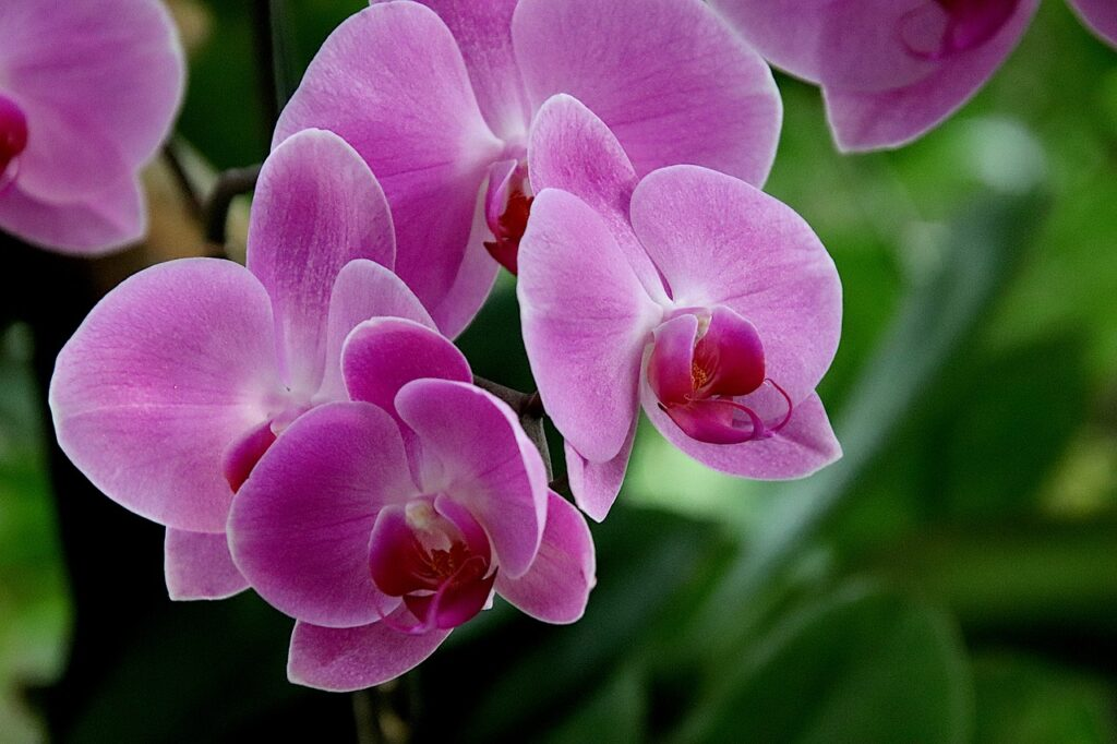 orchid, tropical flowers, greenhouses